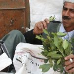 Giant khat delivery found stashed in banana boxes
