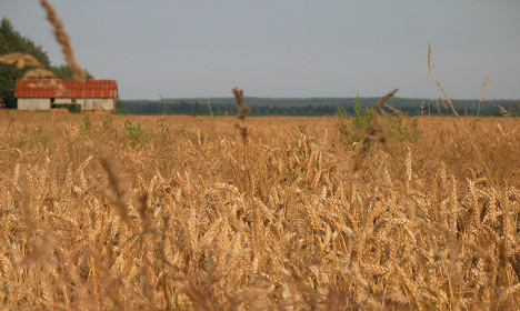 Danish wheat quality at an all-time low