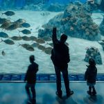 <b>3. Den Blå Planet</b><br> This aquarium is worth going to for the building alone. But also, there are fish. So if you're into that kind of thing, Den Blå Planet is for you. Easily accessible by Metro or cycle, the aquarium is a great mix of aesthetic, educational and simply wonderful. It's not so big that it will take up your whole day (well, unless you're got kids in tow), but you can spend a solid afternoon walking around and then enjoy lunch or a snack in their cafeteria.Photo: Freya McOmish, Scandinavia Standard
