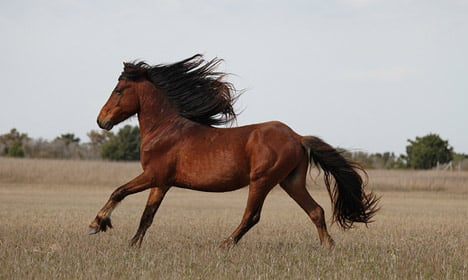 Study sheds light on how humans tamed horses