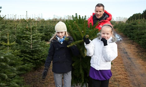 Danish Christmas trees outgrow the competition