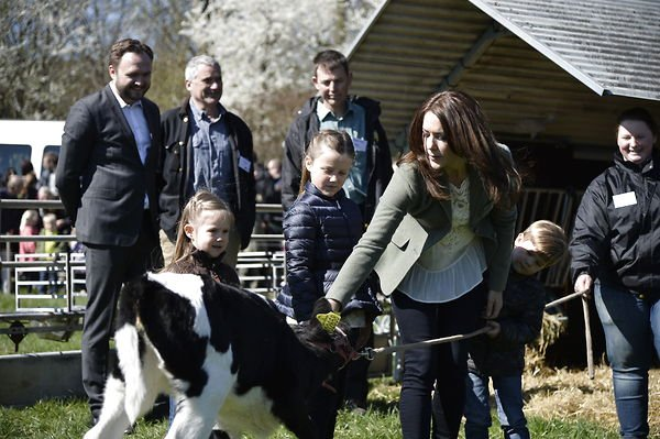 Cows and royals mix as Denmark celebrates annual Organic Day