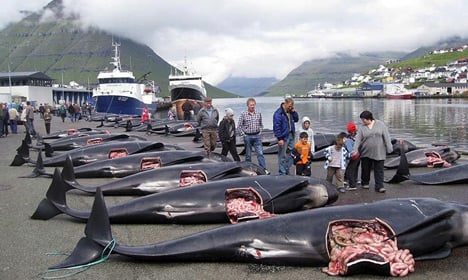 Activists launch anti-whaling action in Faroes