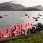 Faroe Islands bar entry to anti-whaling activists