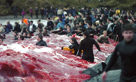 Anti-whaling activists barred from Faroes