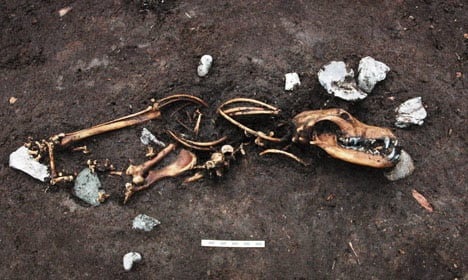 Iron Age sacrificial site uncovered in Denmark