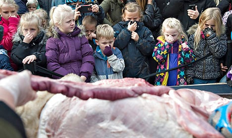 Despite outrage, Danish zoo dissects lion for kids