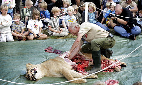 Lion dissection is 'incredibly Danish'