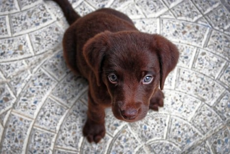 How can you resist those eyes? Photo: kpgolfpro/Pixabay