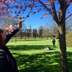 Locals can't get enough of the cherry trees in the spring.Photo: Juan Franco