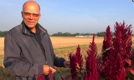 Danish scientists turn to ancient crops to save planet