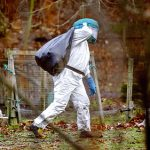 Exports threatened after bird flu found in Danish poultry
