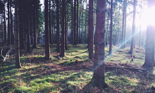 How to enjoy the Danish nature in the dead of winter