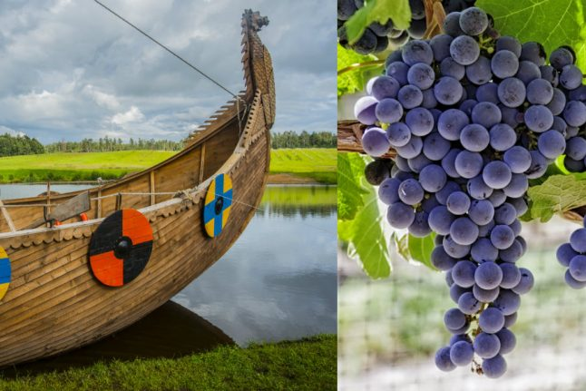 Danish Vikings 'may have made their own wine'