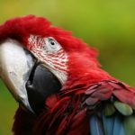 """<b> At skyde papegøjen – Shooting the parrot</b><br>  To be extremely lucky, for example: """"Wow, you really shot the parrot finding those shoes so cheap"""". Photo: EBFoto/<a href="""" https://depositphotos.com/136709150/stock-photo-beautiful-macaw-parrot.html"""">Depositphotos</a>"""