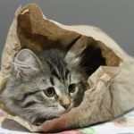 """<b> At købe katten i sækken – Buying the cat in the sack</b><br>  Not to be confused with 'let the cat out of the bag', this phrase is used to describe a transaction that went badly. """"Avoid buying the cat in the sack: Five things you should check when buying a used car"""".Photo: endomass/<a href="""" https://depositphotos.com/30650003/stock-photo-puppy-of-siberian-cat-in.html"""">Depositphotos</a>"""