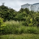 Copenhagen mayor puts on hold plans to develop natural area