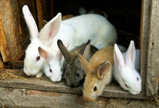 46 rabbits discovered in Danish apartment