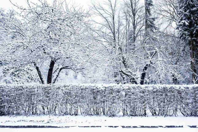 White Christmas in Denmark called off by meteorologists