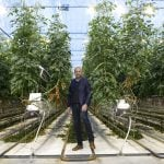 Danish tomato farmer aims to become Europe's biggest producer of medicinal cannabis