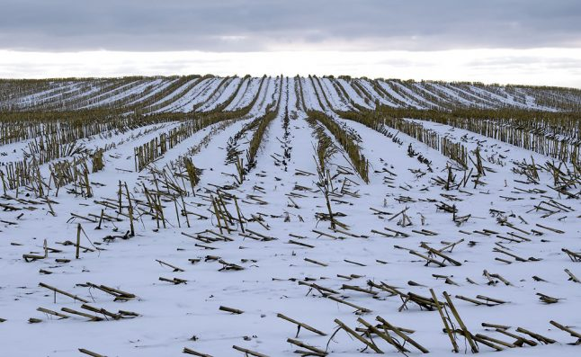 High winds and snow forecast for Denmark in chilly winter week