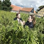 111 Danish patients given medicinal cannabis in first month of trial