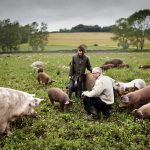 Denmark's government to spend a billion on organic farming