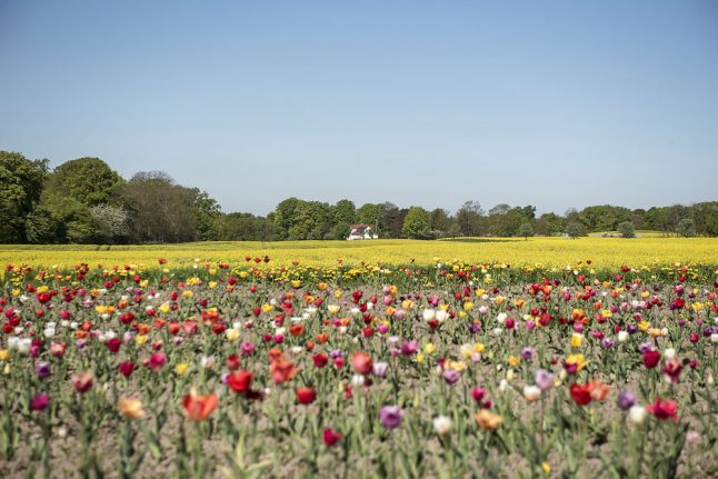 27 degrees: Denmark's 2018 spring continues to outshine 2017 summer
