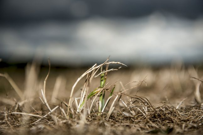 Denmark considers political relief for drought-hit farmers