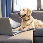 Denmark to get 'dog-owner-only' apartments