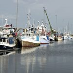 Opinion: Overfishing in Danish seas is bad for the environment and the economy