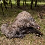 Mysterious animal found without legs, feet in Danish forest