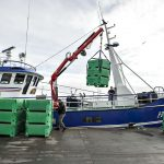 Denmark to continue herring fishing after warnings over dwindling population