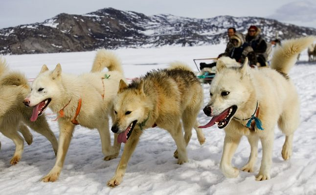 Danish transport ministry gives green light to dog sleds