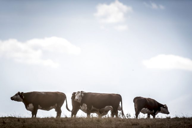 Danish agriculture wants to be carbon neutral by 2050