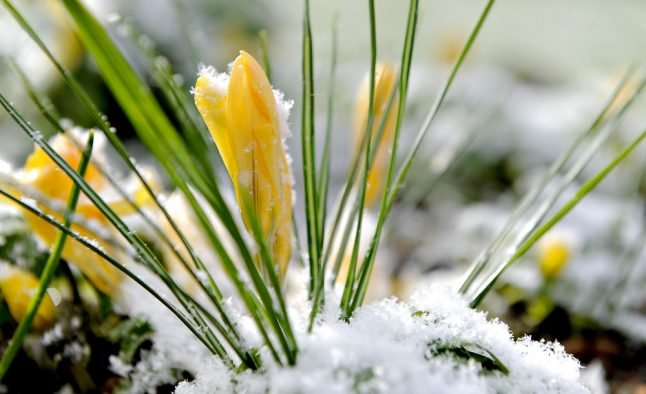 What happened to spring? Snow, sleet and icy roads this weekend in Denmark