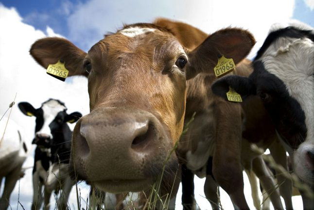 Danish dairy giant to test carbon footprint of farmers