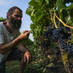 Winemaking in Scandinavia, a world away from French chateau luxe
