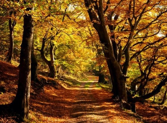 Eight great places to visit during autumn in Denmark