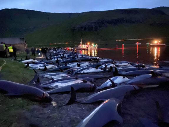 Faroe Islands to re-evaluate dolphin-hunting after 1,400 animals killed