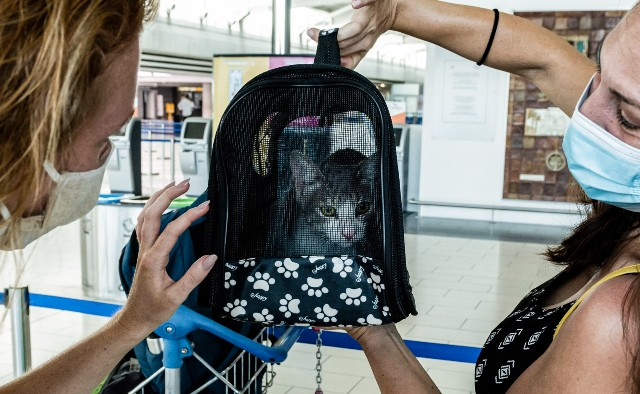 How to bring your cat or dog to Europe from the United States