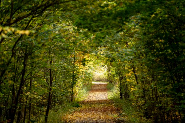 Falling leaves in a Danish forest. Denmark wants to vaccinate a number of groups against influenza with autumn on the way.